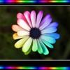 couleur-bonheur