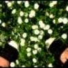 Aiie-Dream-x3