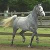 sos-horses-sos