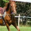concours-du-beau-cheval