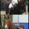 justhorses72