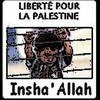 palestine-free