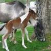 horsy-girliz