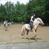 equus44