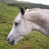 centre-equestre-dusomail