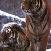 animaux2012