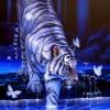 white-tiger92
