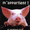 animaux-maltraitance-sos