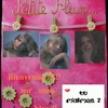 pitite-fleur62