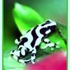 Zze-froggYy