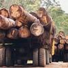 Save-Amazonia