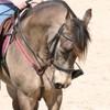 x3mon-petit-poneyx3