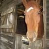 cheval-info-57