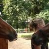 courses-de-chevaux
