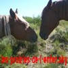 les-prairies-de-l-enfer