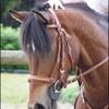 Quazac-mon-poney