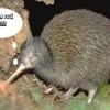 Seconde-Kiwi