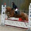 poneys--love