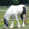 la-folle-des-chevaux-69
