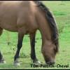 T0m-Passi0n-Cheval