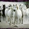 chevaux-48
