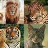 the-animals-world