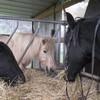 horsegirl57