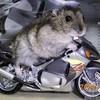 miss-biker