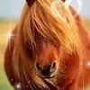 lovelyhorse07