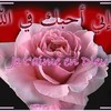 safiyahudhayfa