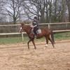horse-x-lessard