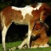 xx-chevaux33-xx