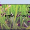 purple-grass