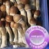 champignons-magiques