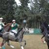 horsetoto