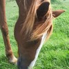 horselove-44
