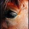 amor-equitation