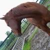 passion-cheval53