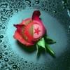 algerie-ch
