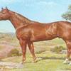 Beautiful-my-horses