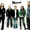 x-The-Cardigans