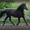 xx-Horse-Love13-xx