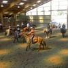 lovequarterhorse