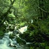 juju-green-world