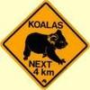 koalachloe