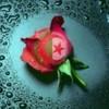 dounia-algerienne