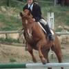 love-horses02