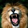 LION972