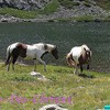 Photo--de--x--chevaux