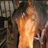 les-chevaux-notre-reve